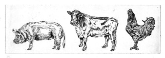 3 Tiere | Ätznadelradierung | 10 x 25