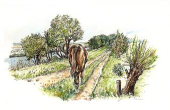 Kattenhorns Pferd 2 | Tusche & Aquarell | 20 x 30