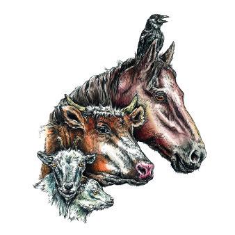 Kattenhorns Pferd Titel | Tusche & Aquarell | 30 x 20