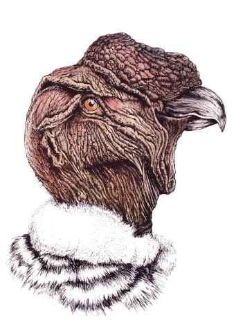 Andenkondor|Siebdruck nach Zeichnung & handcoloriert|50x40