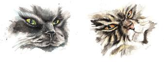 Cats | Aquarell | 30 x 15