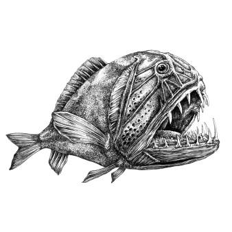 Fangzahnfisch | Tusche | 18 x 23