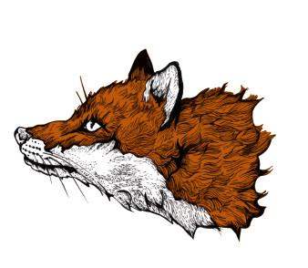 Fox 1 | Tusche und Koloration | 4 x 5