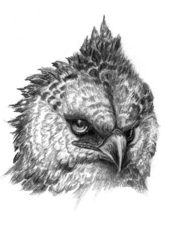 Harpye | Bleistift | 20 x 15
