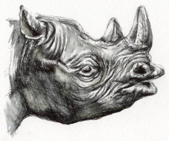 Nashorn|Tusche