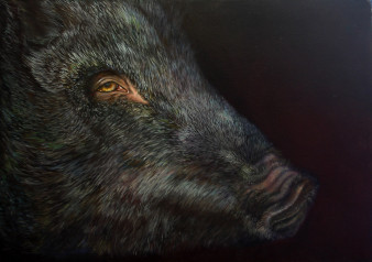 Hallenser Wildschwein|Öl auf Pappe|50x70